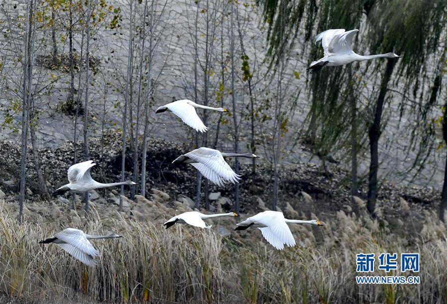 济南:黄河之滨jingse美