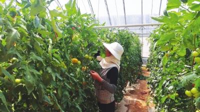 """红古区推广""""寿光模式""""打造富有特色的农业产业扶持政策"""
