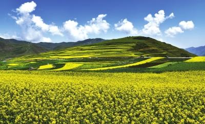 农业促旅游 旅游带产业