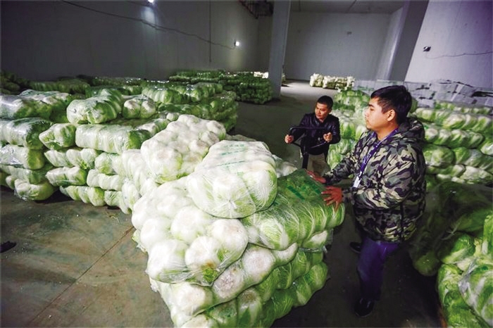 我市已储备1万吨冬春蔬菜 以耐贮存、易周转品种为主