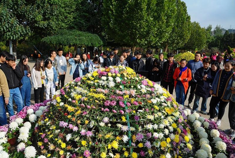 兰州植物园6万盆菊花争奇斗艳引得游客流连忘返