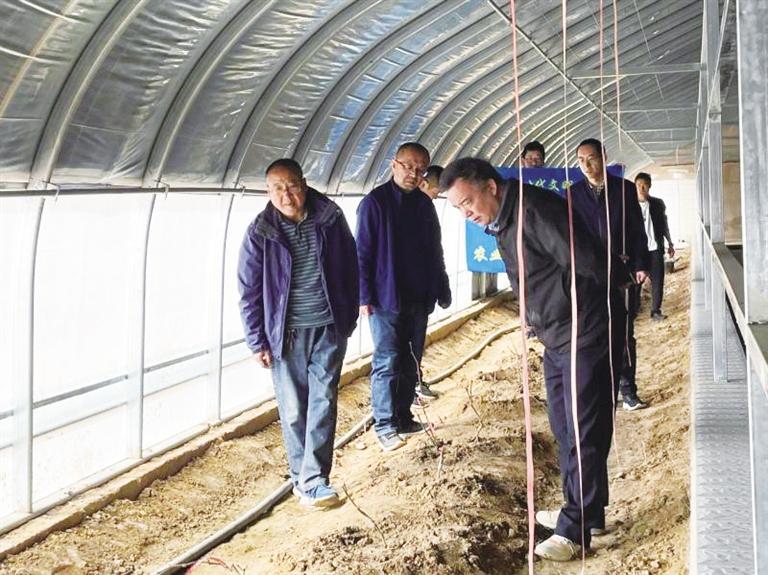 永登县邀请葡萄专家进棚入户送技术