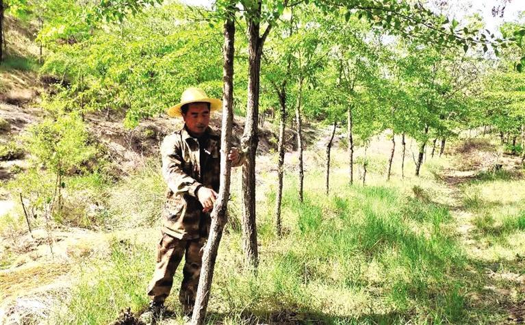 21年,让10万亩荒山披绿装全国劳模高科和其队友